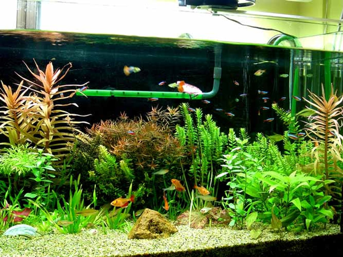 planted tank (mostly live plants and fish) - 4ft x1.5ftx1.5ft Planted tank