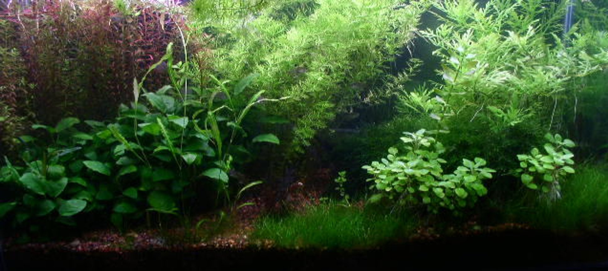 40 gallons planted tank (mostly live plants and fish) - This is my updated 40 gal tank.