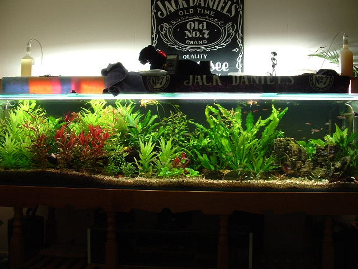 225 gallons planted tank (mostly live plants and fish) - This is the 8 footer but after it was redone about 4 months ago, along with the help of c02. We are rather proud.