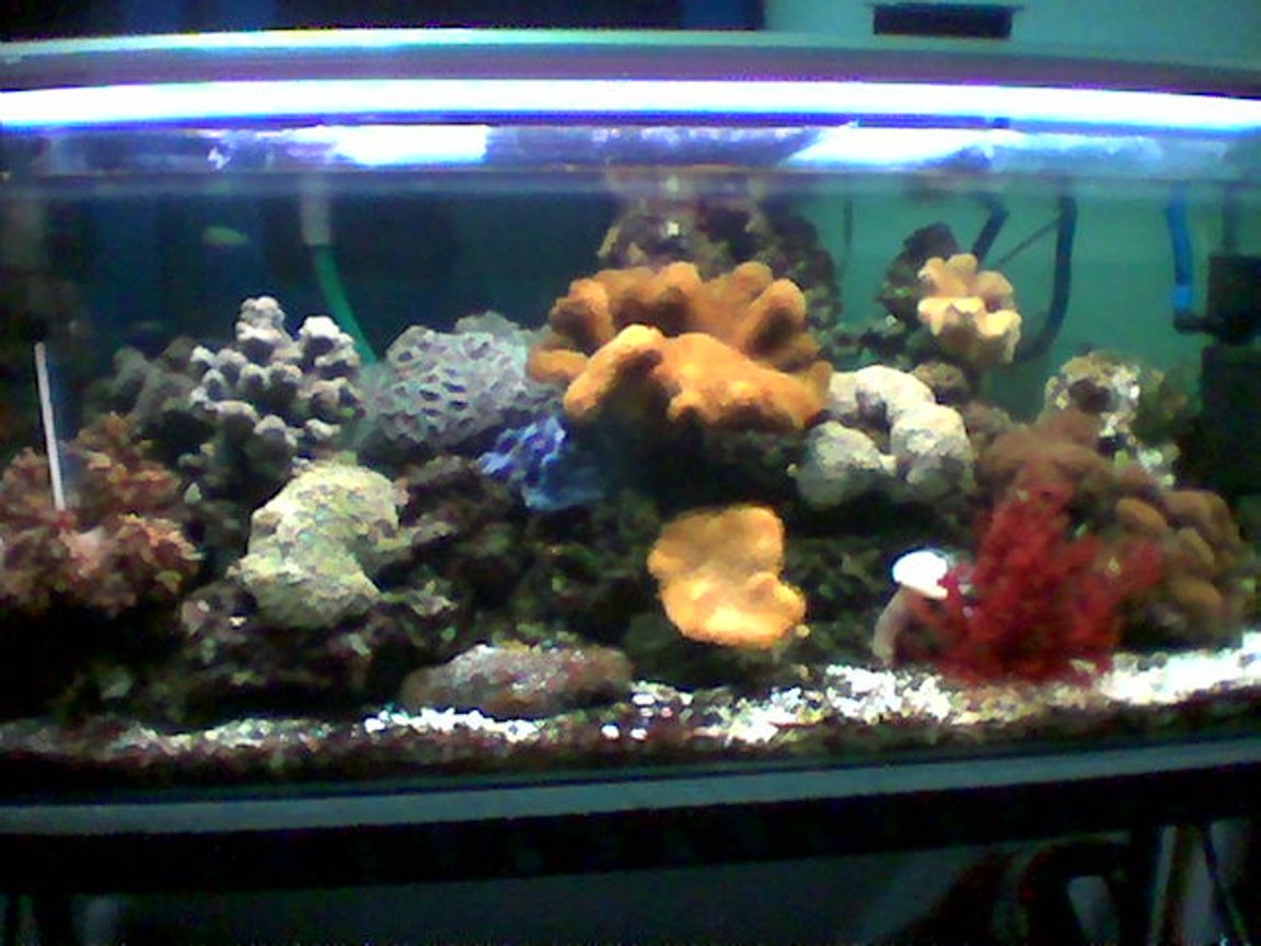 planted tank (mostly live plants and fish) - 90 cm length tank with reef, coral and fish.