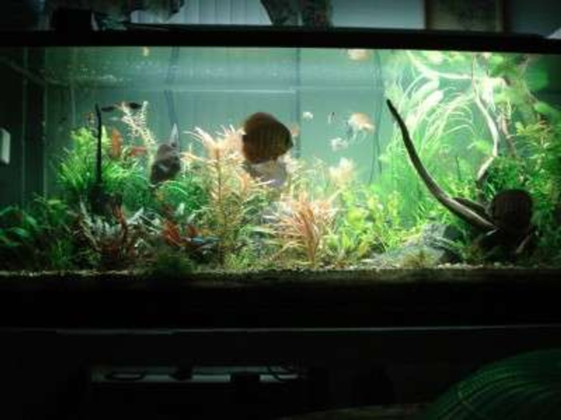 180 gallons planted tank (mostly live plants and fish) - my tank