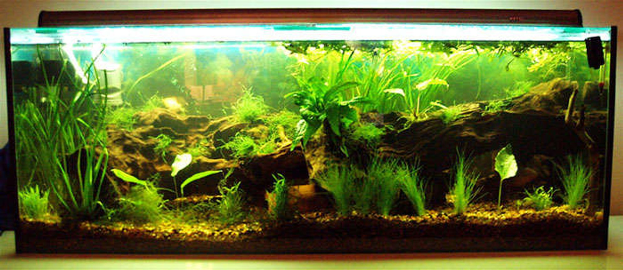 50 gallons planted tank (mostly live plants and fish) - Early Design-2007