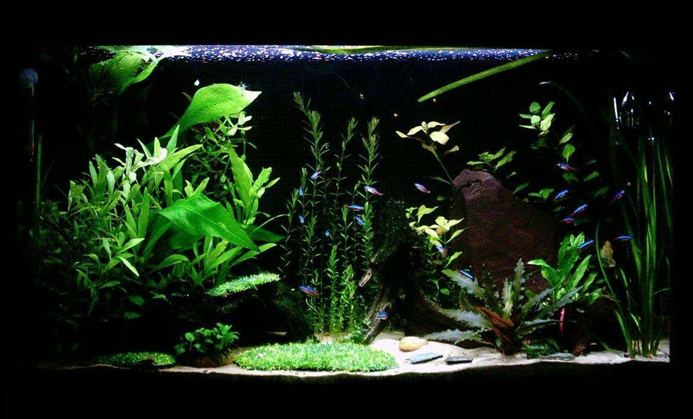 33 gallons planted tank (mostly live plants and fish) - 'The Clearing' 33G Hi-Tec Planted Tank