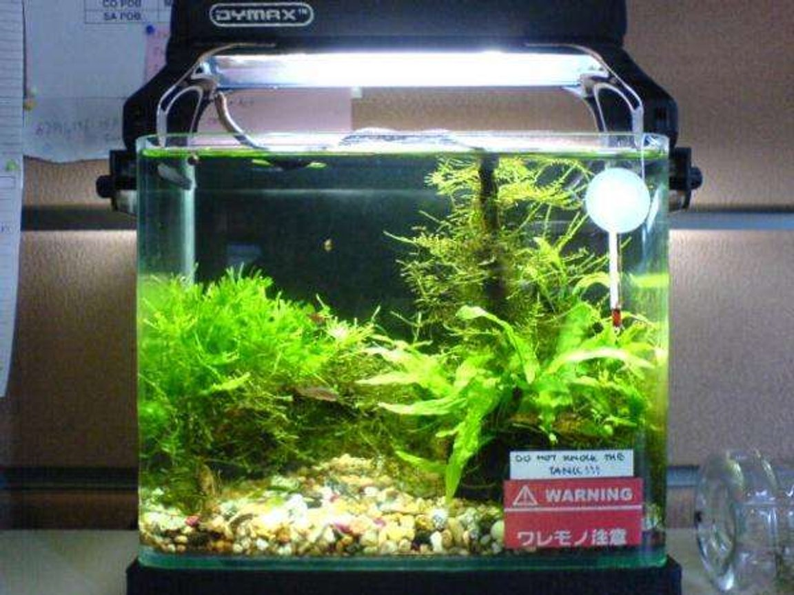3 gallons planted tank (mostly live plants and fish) - my office 9 inch tank....