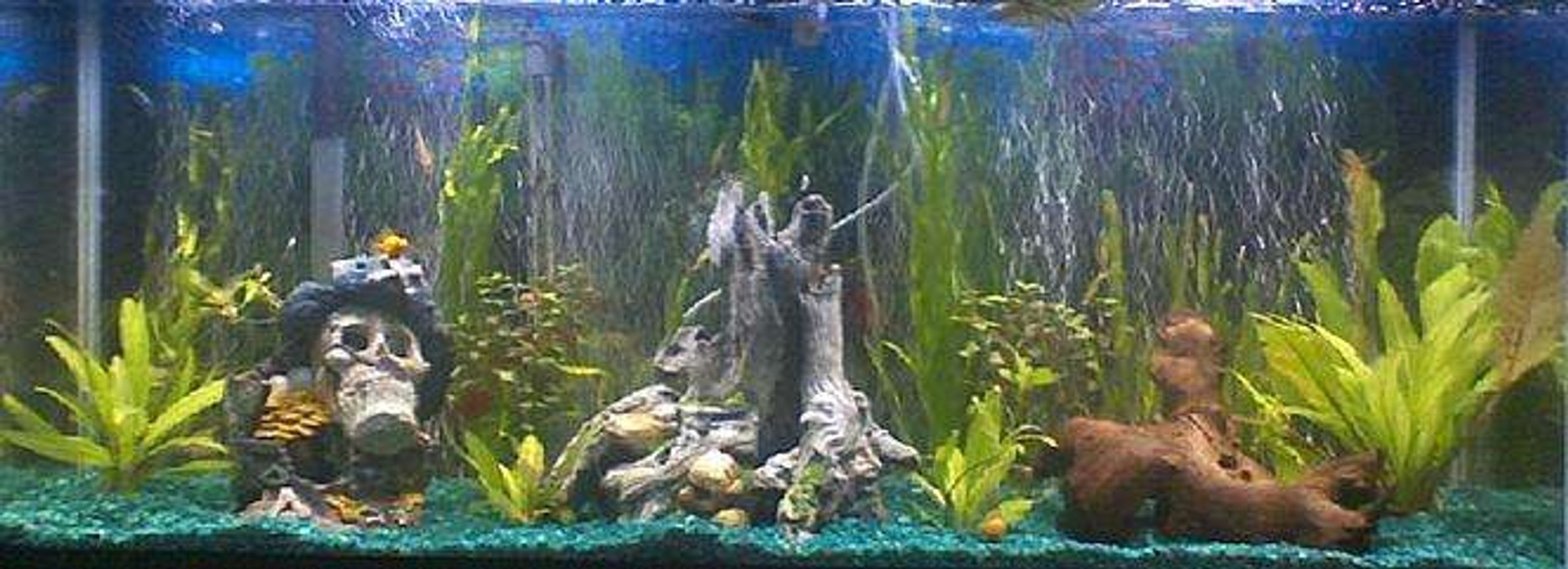55 gallons planted tank (mostly live plants and fish) - My tank
