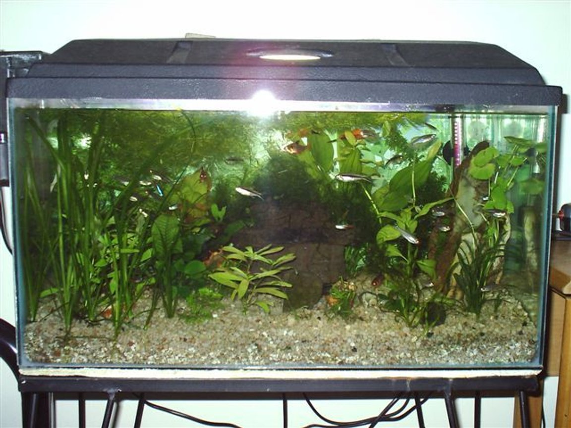 14 gallons planted tank (mostly live plants and fish) - My Tank