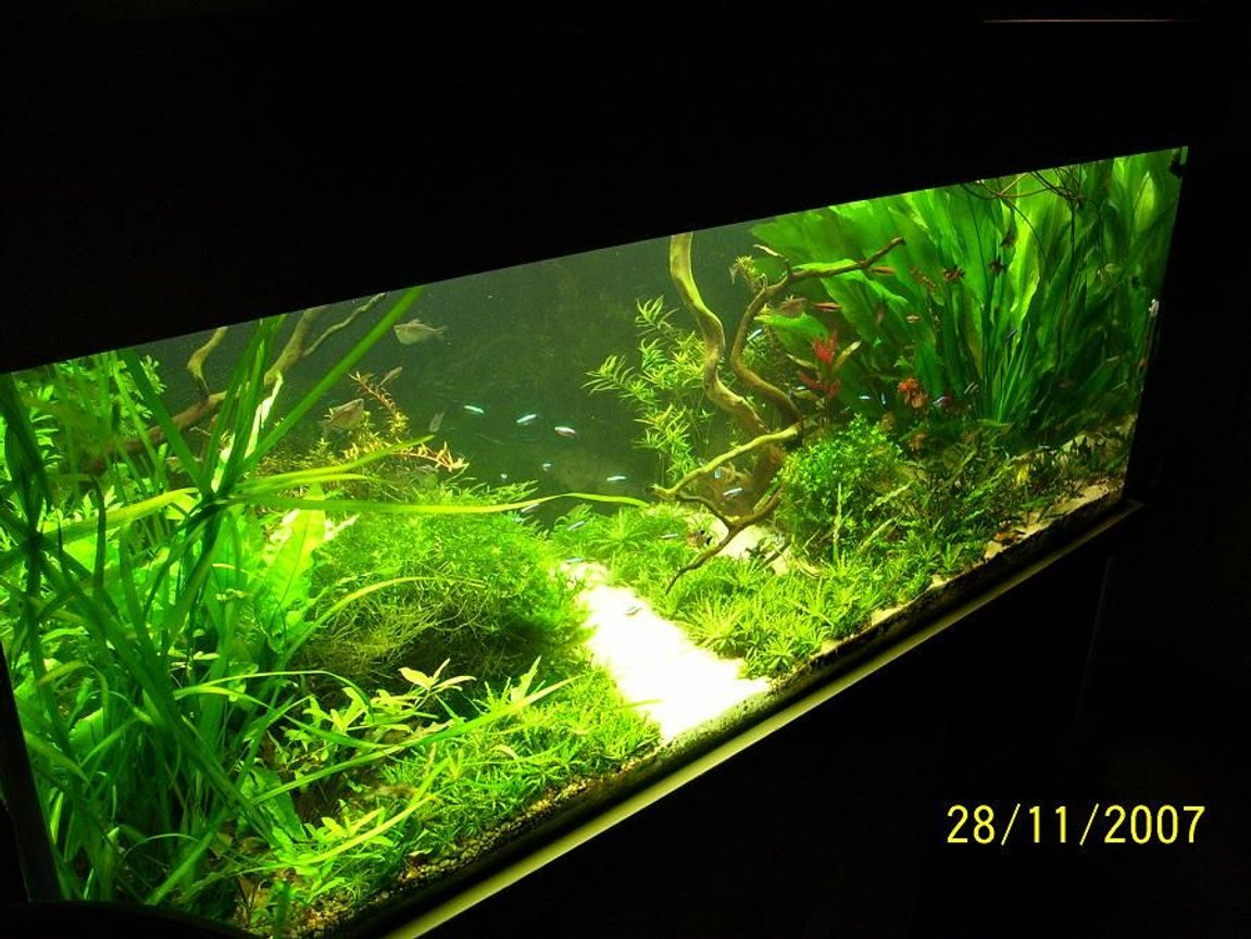 125 gallons planted tank (mostly live plants and fish) - hj