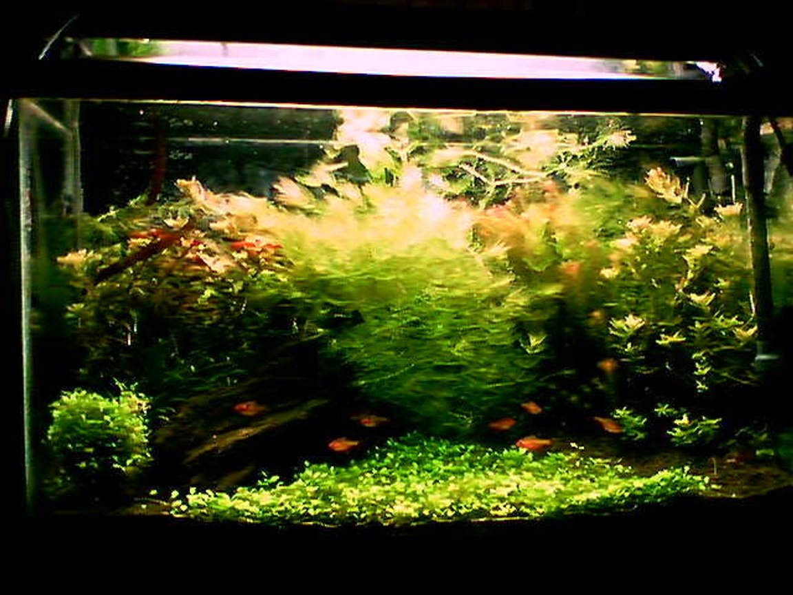 29 gallons planted tank (mostly live plants and fish) - 29 gallon, bad phone pic