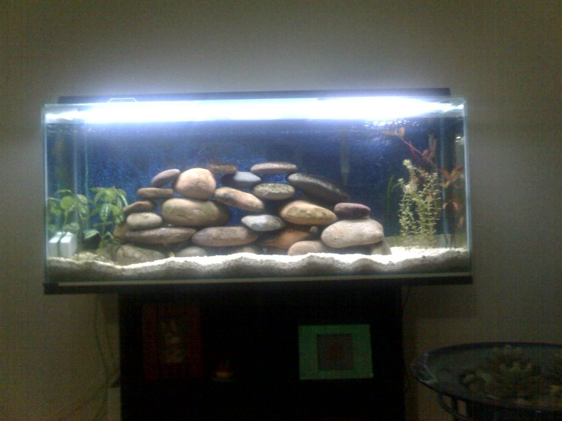 50 gallons planted tank (mostly live plants and fish) - fish are hiding but u can see the rocks and plants though