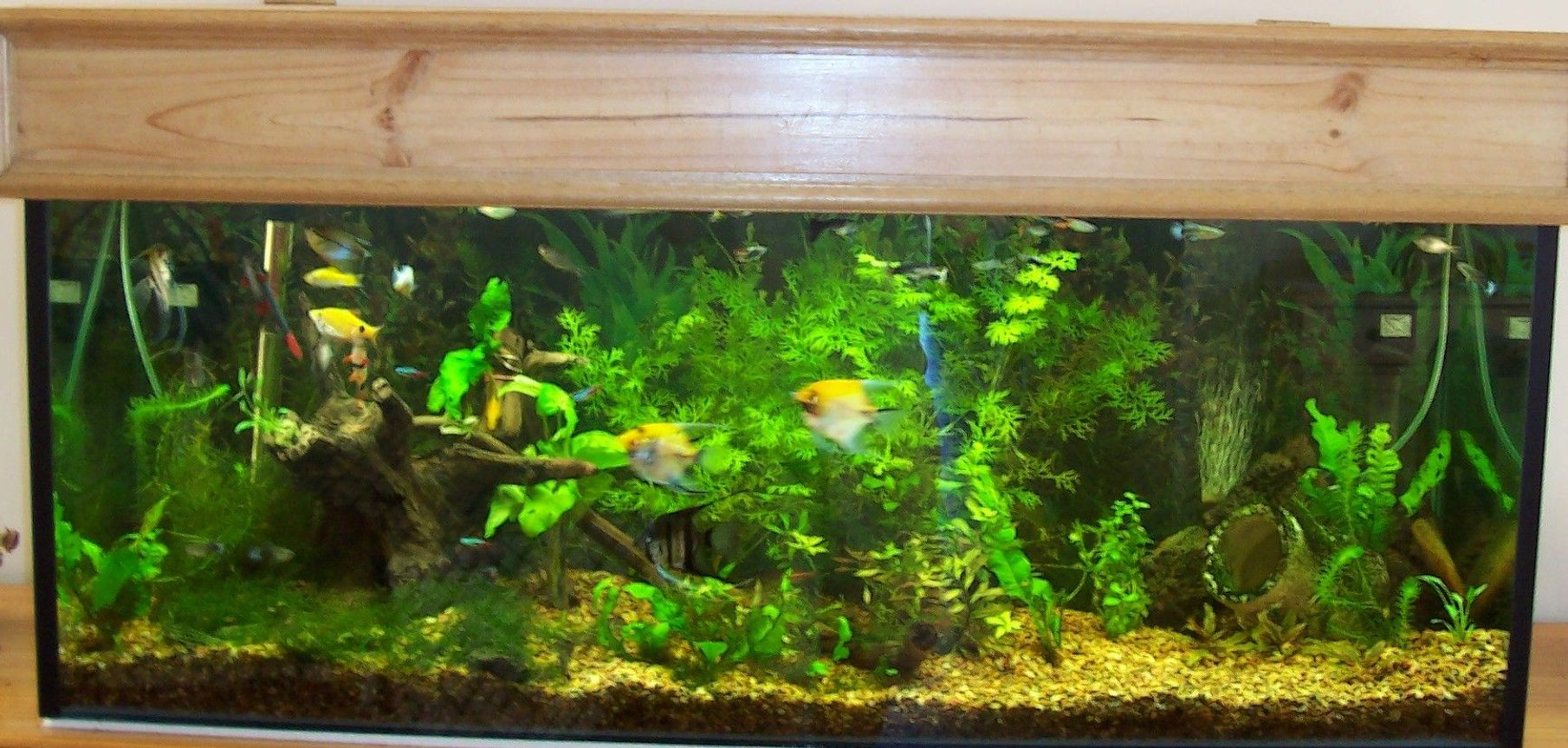 50 gallons planted tank (mostly live plants and fish) - 4 ft tropical community tank with assorted plants, no co2.