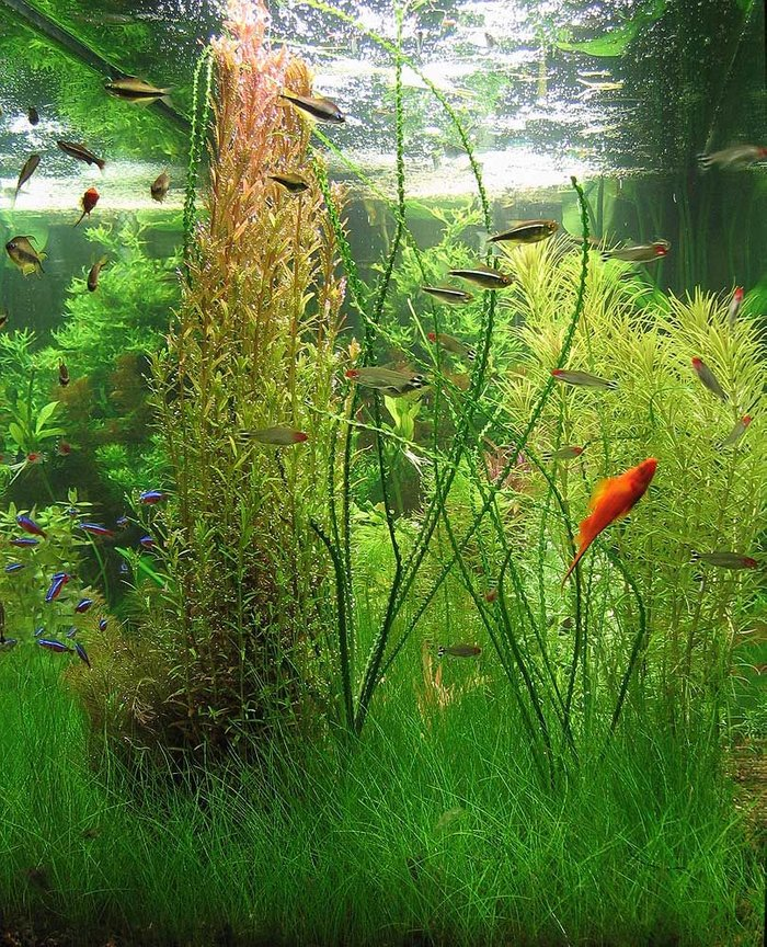90 gallons planted tank (mostly live plants and fish) - End on.