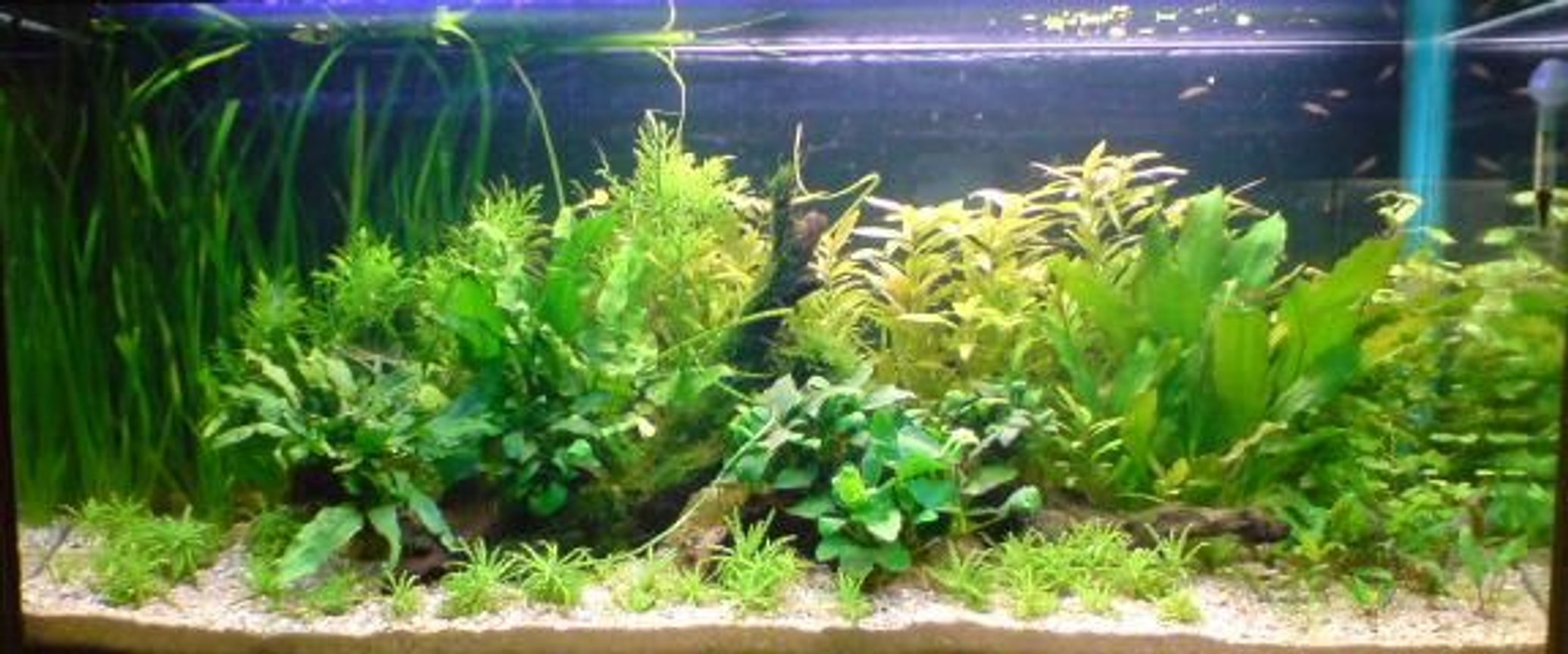 planted tank (mostly live plants and fish) - 250 litre plant tank. Recent scape.