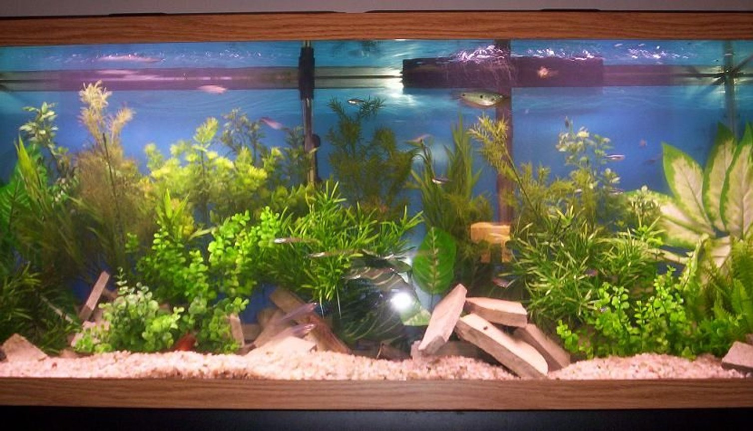 55 gallons planted tank (mostly live plants and fish) - 55G Freshwater planted tank