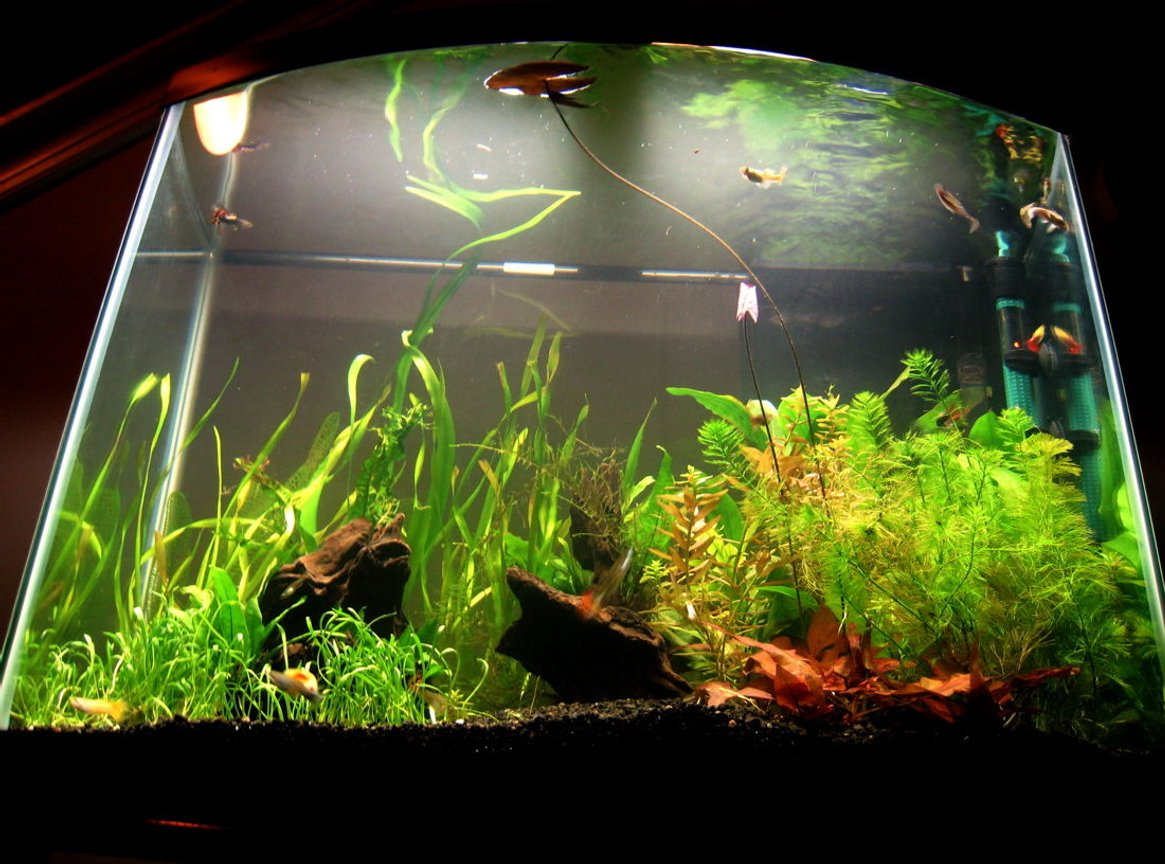 28 gallons planted tank (mostly live plants and fish) - looking up