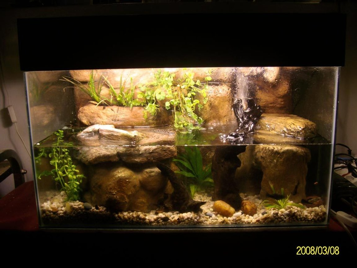 "30 gallons planted tank (mostly live plants and fish) - A 2' 20 Gallon ""Paludarium"" type tank with DIY rock background, made from styrofoam and concrete. Home to 3 juvenile African/Atlantic Mudskippers and 5 Dalmation Mollies. Includes: Powerhead driven waterfall DIY CO2 DIY Plywood canopy 2 x 14W CF"