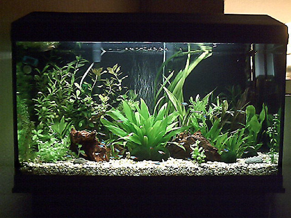 3 gallons planted tank (mostly live plants and fish) - close up of tank sorry bout the cam agen