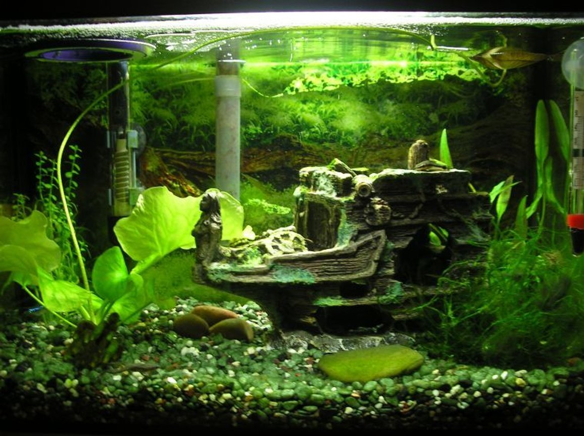 5 gallons planted tank (mostly live plants and fish) - Updated pic of my 5 gallon tank 03/31/08