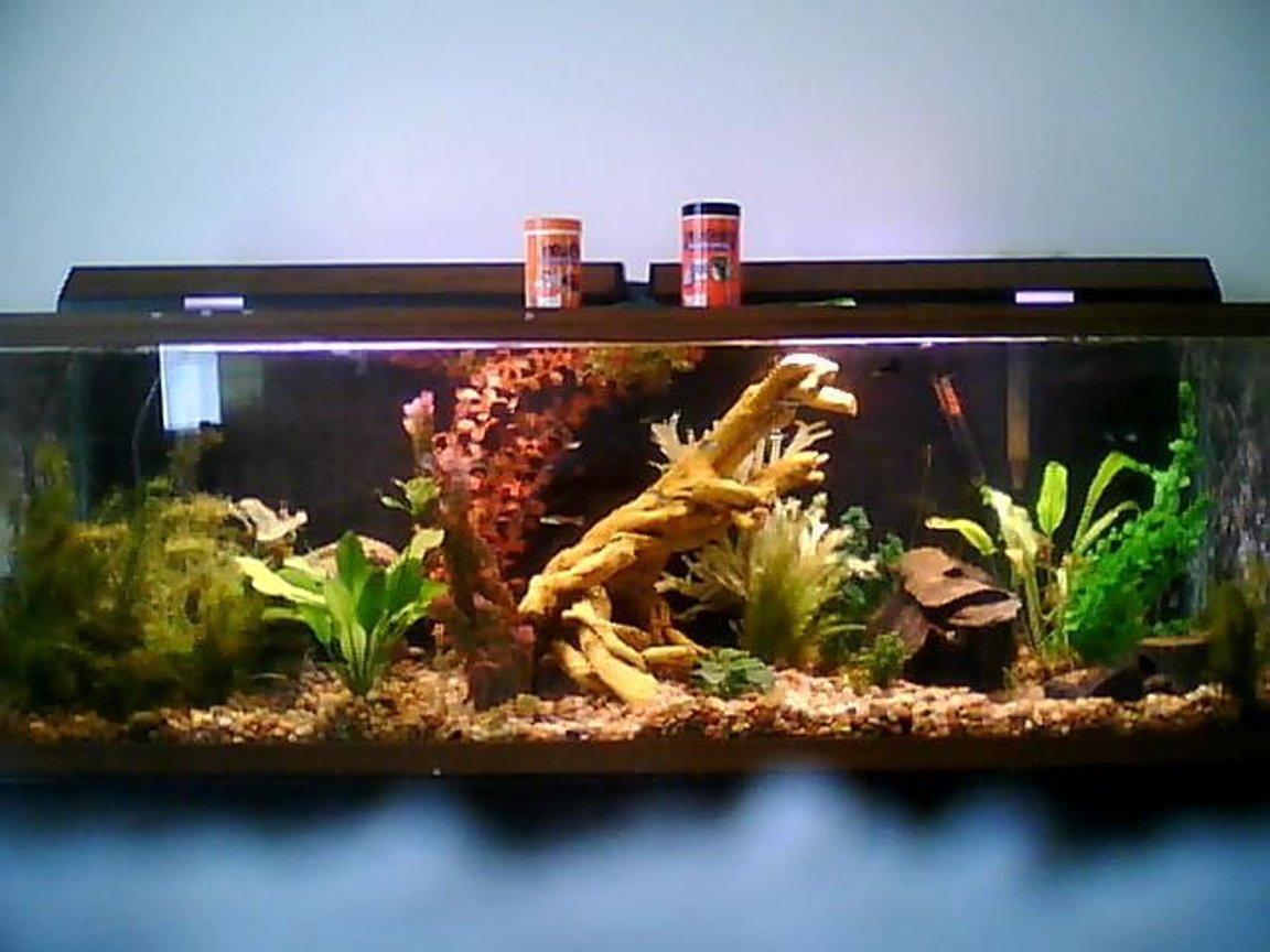 100 gallons planted tank (mostly live plants and fish) - 100 gallon planted community tank sorry about the picture quality i took it with a phone and i couldnt get the whole thing up close i will upgrade it soon