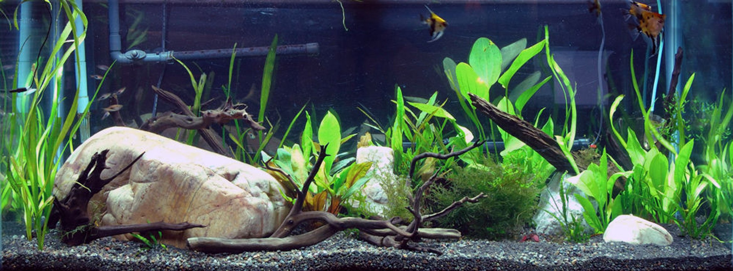 75 gallons planted tank (mostly live plants and fish) - My big 75 gallon tank.