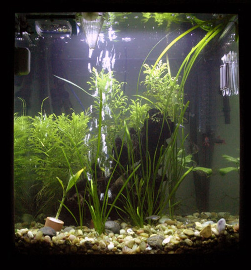 33 gallons planted tank (mostly live plants and fish) - This is my tank as of April First 2008
