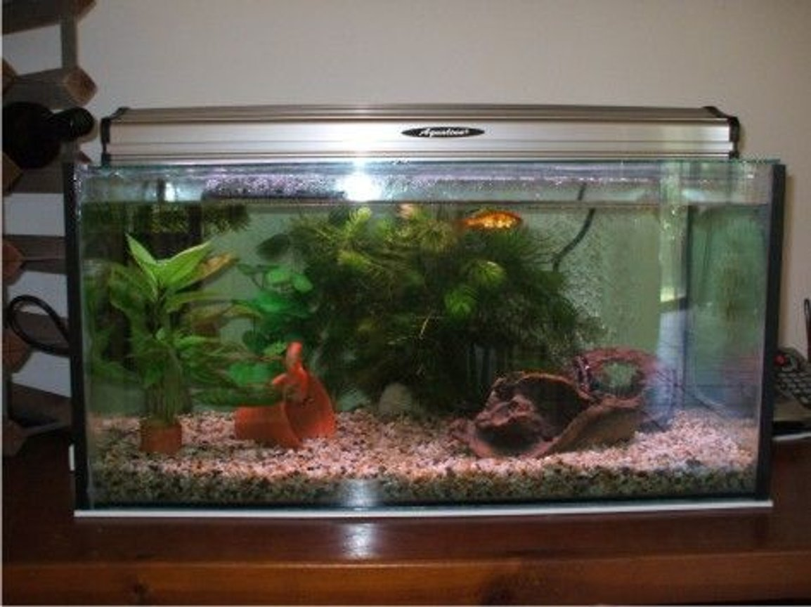 20 gallons planted tank (mostly live plants and fish) - 20 gallon goldfish tank