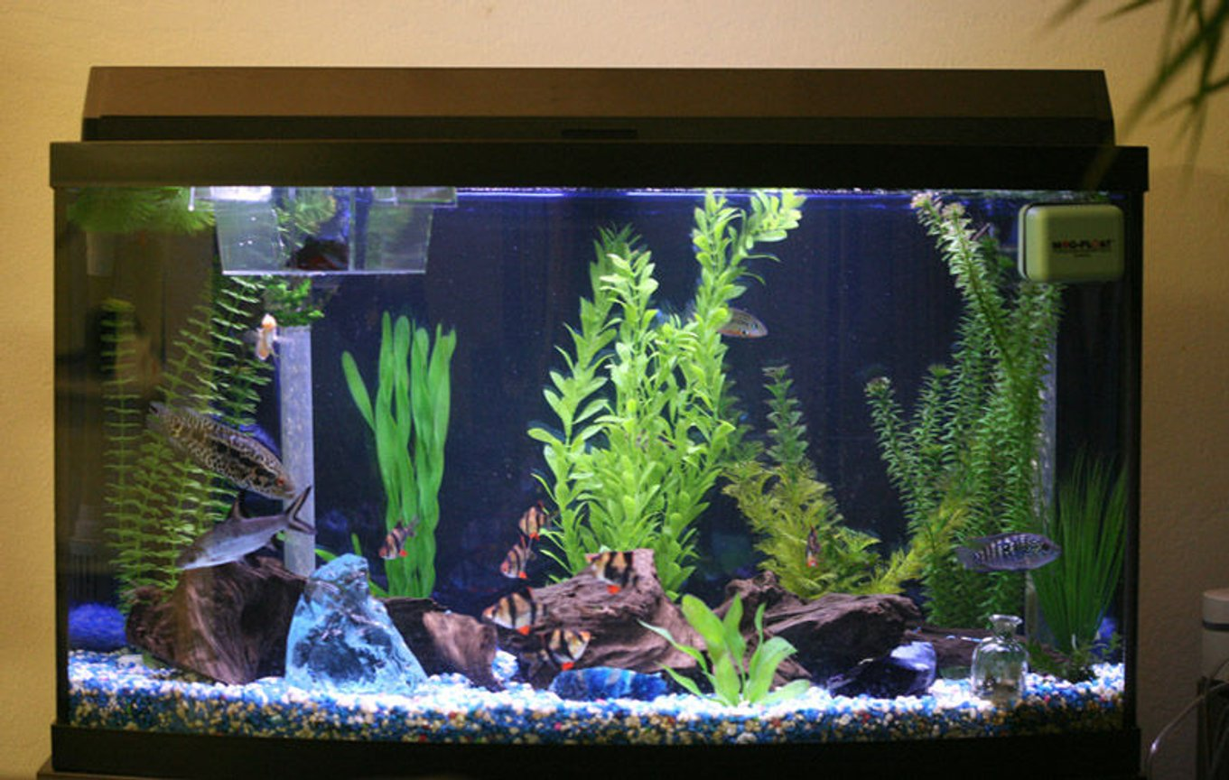 46 gallons planted tank (mostly live plants and fish) - 46 gal bow front