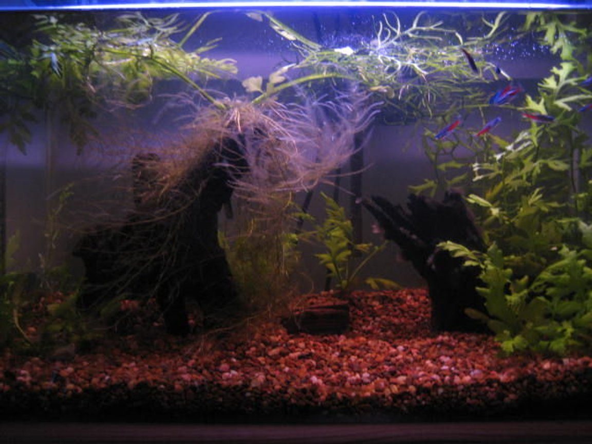 14 gallons planted tank (mostly live plants and fish) - guess what? ... its a fishtank :)
