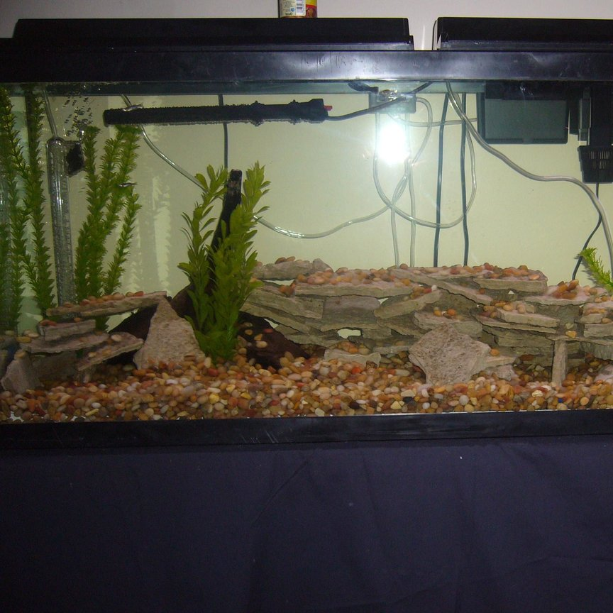 55 gallons planted tank (mostly live plants and fish) - yet another crappy pic