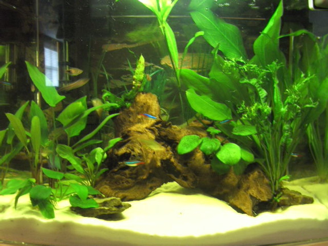 12 gallons planted tank (mostly live plants and fish) - 2 months old, all plants are growing and fish are thriving.