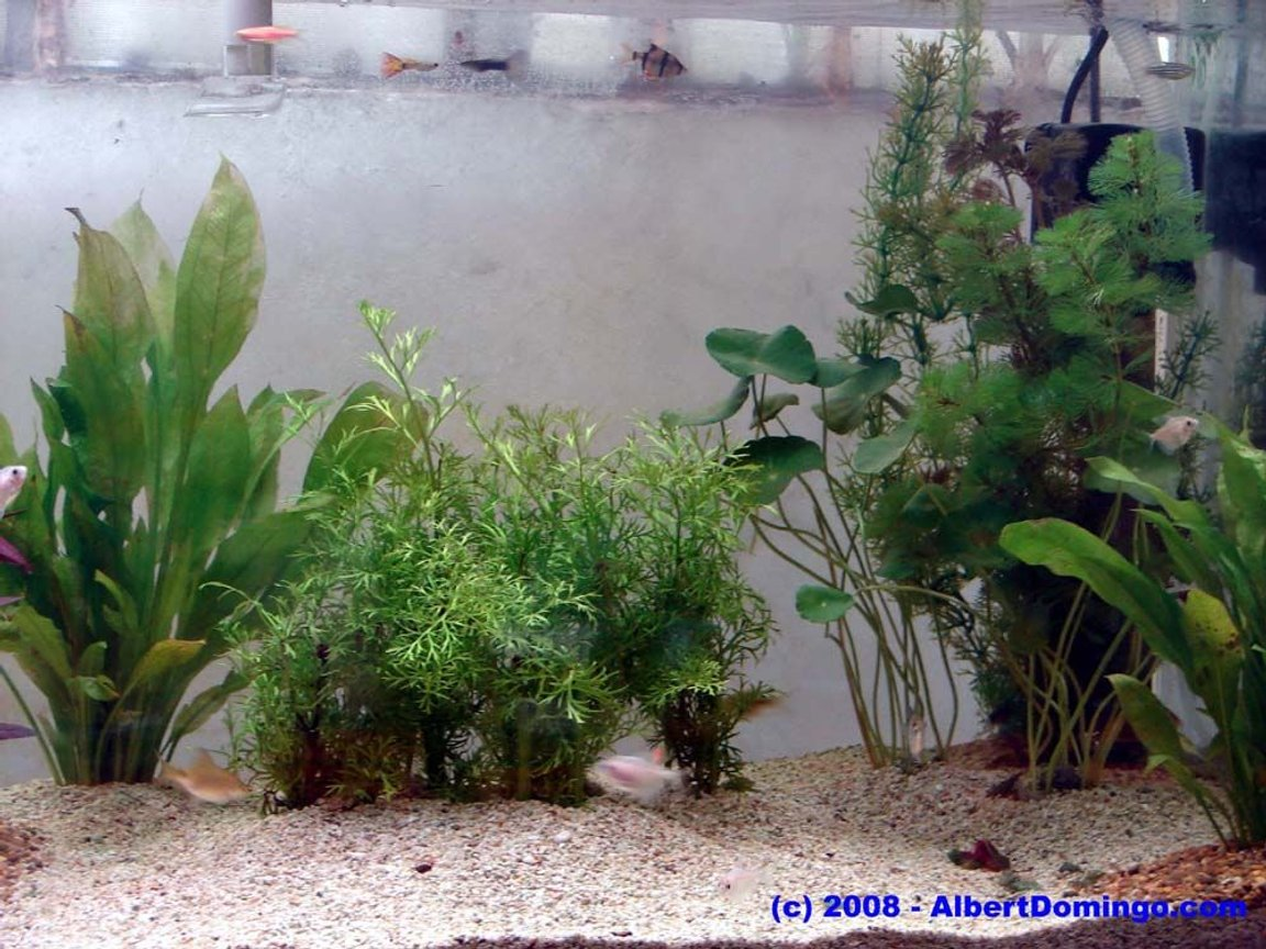 100 gallons planted tank (mostly live plants and fish) - Right side of the tank.