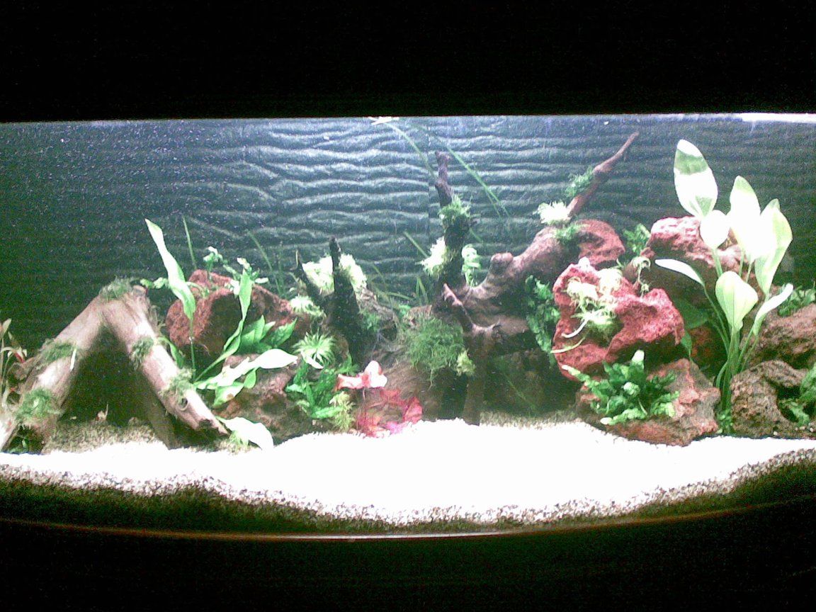 66 gallons planted tank (mostly live plants and fish) - Adrian's Planted Tank