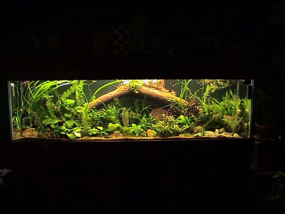 35 gallons planted tank (mostly live plants and fish) - 125 gallon 20 variety of plants 70 tetras and 15 bottom feeders.