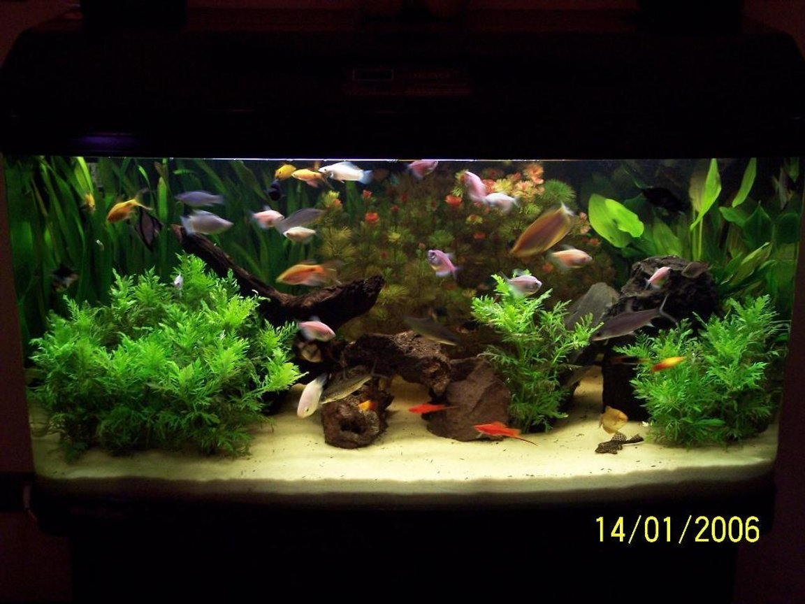 65 gallons planted tank (mostly live plants and fish)