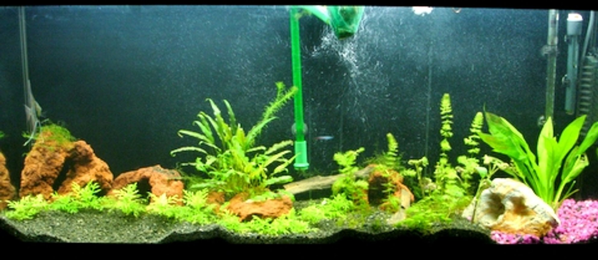 55 gallons planted tank (mostly live plants and fish) - 55 Gallon Freshwater Planted Tank
