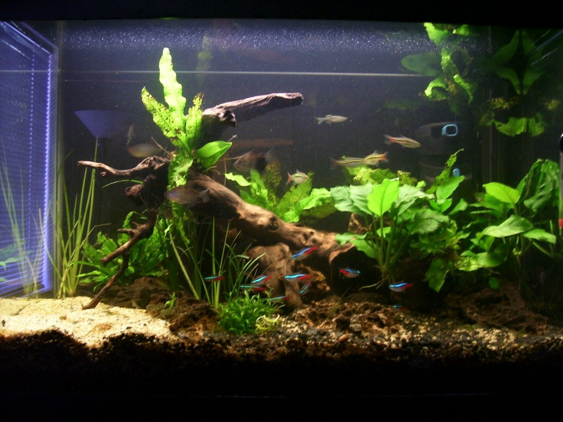 20 gallons planted tank (mostly live plants and fish) - picture of my tank