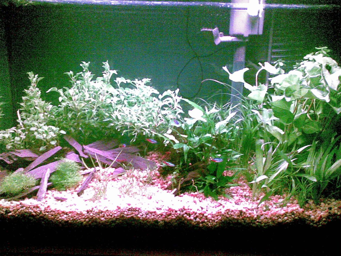 29 gallons planted tank (mostly live plants and fish) - This is my 29