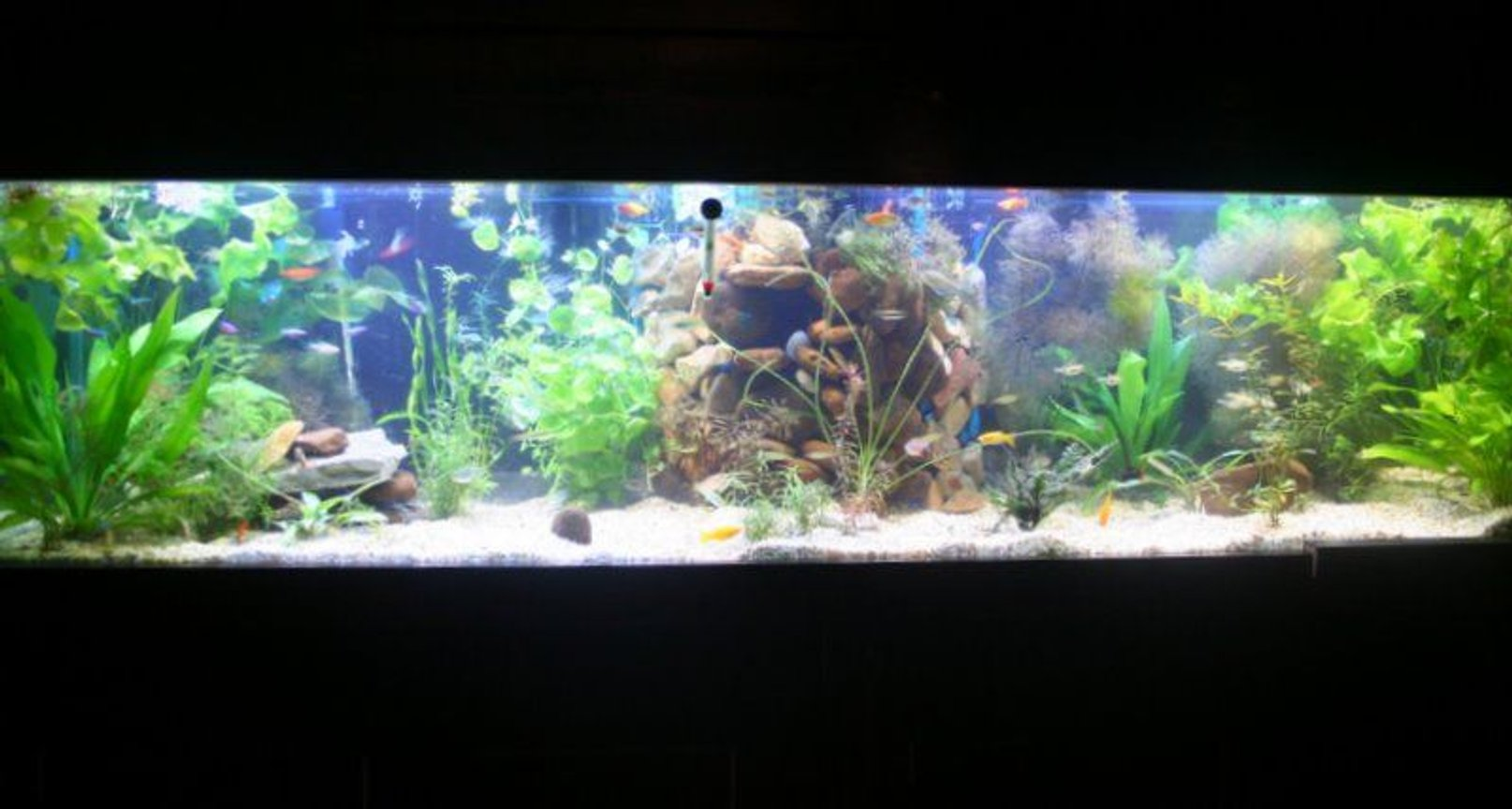 125 gallons planted tank (mostly live plants and fish) - 100 planted tetra tank. Ive got all the bells and whistles but no need to mention all that.... its all about the end result right??