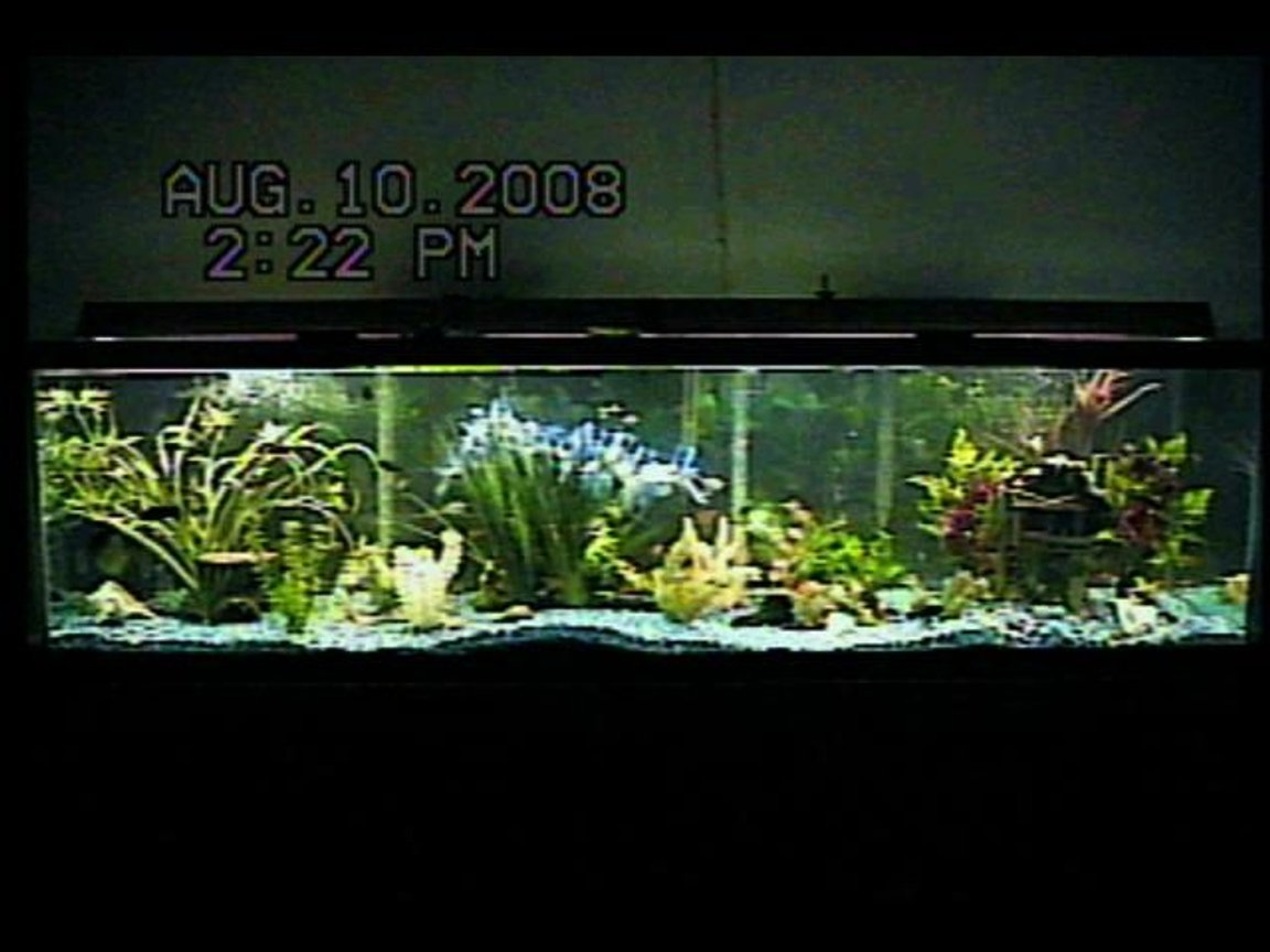 125 gallons planted tank (mostly live plants and fish) - 125-gallon freshwater community fish aquarium