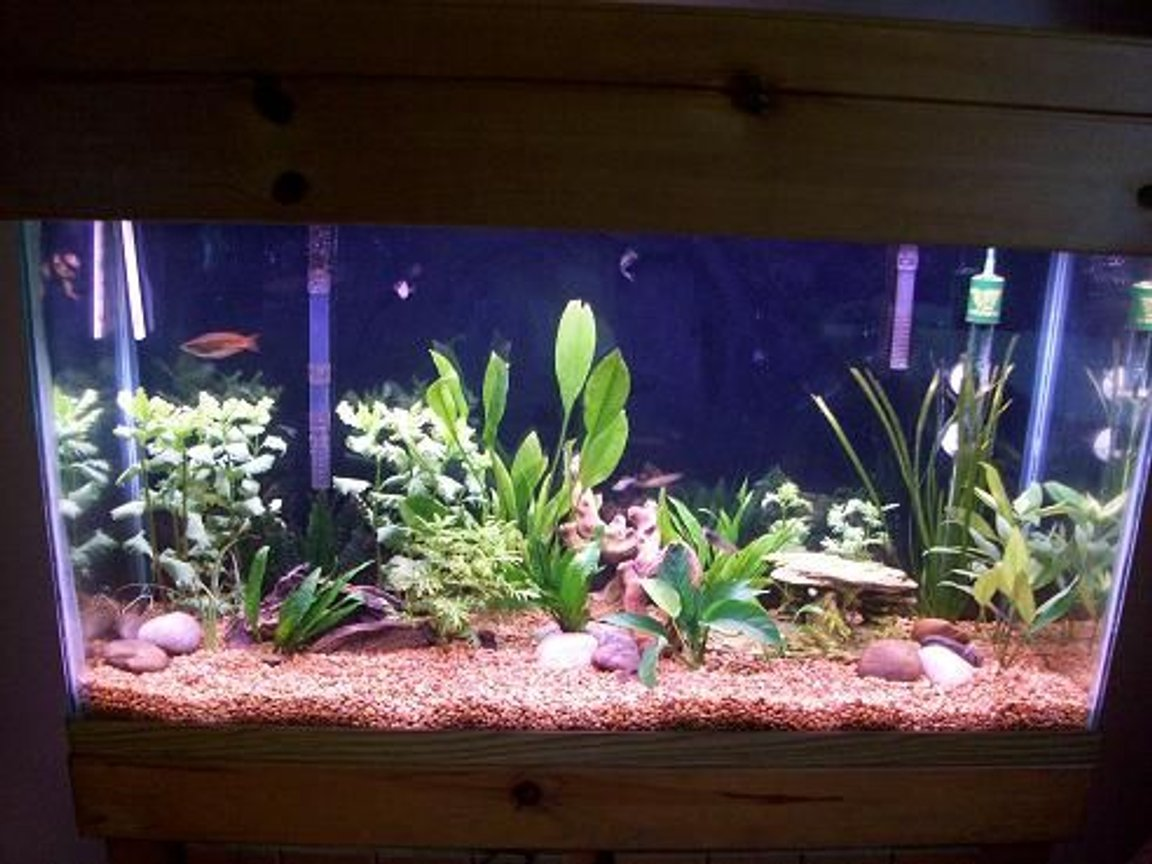 45 gallons planted tank (mostly live plants and fish) - 45 gal planted