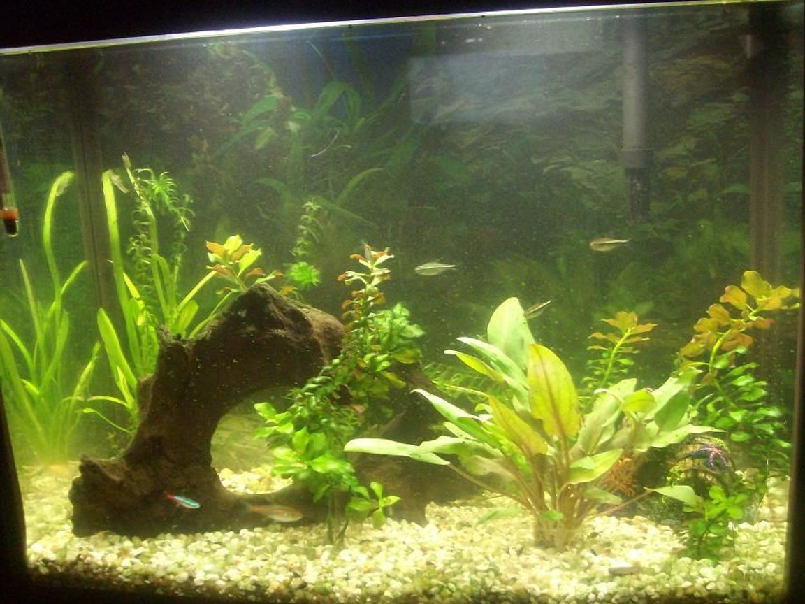 36 gallons planted tank (mostly live plants and fish) - My First 14g planted tetra tank