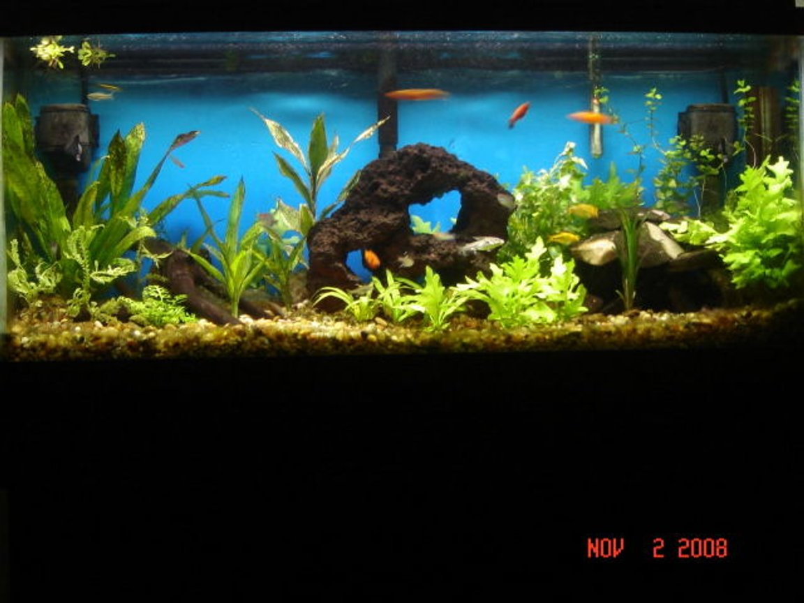 90 gallons planted tank (mostly live plants and fish) - all live plants, 8 weeks a long. still a work in progress. the rock pile has several tunnels and hiding spots, home made drift wood and two antique bottles.