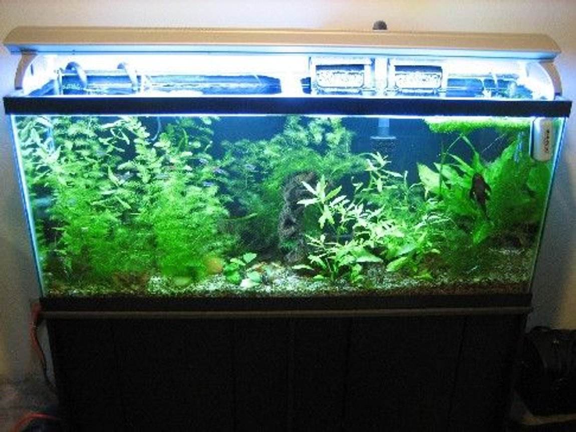 55 gallons planted tank (mostly live plants and fish) - growing like crazy