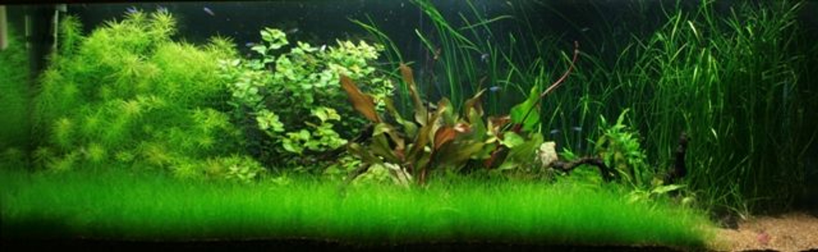 180 gallons planted tank (mostly live plants and fish) - 180g Planted
