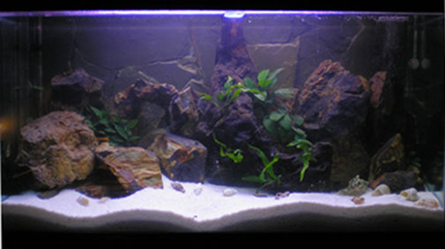 188 gallons planted tank (mostly live plants and fish) - Dimension 100x50x40 Light: 1 x Silvania Gro lux od 45cm 1 x Philips AquaRele 60 cm 1 x Arcadia Marine blue 60cm Fishes: 6 x Callochromis melanostigma 3 x Lamprologus speciosus