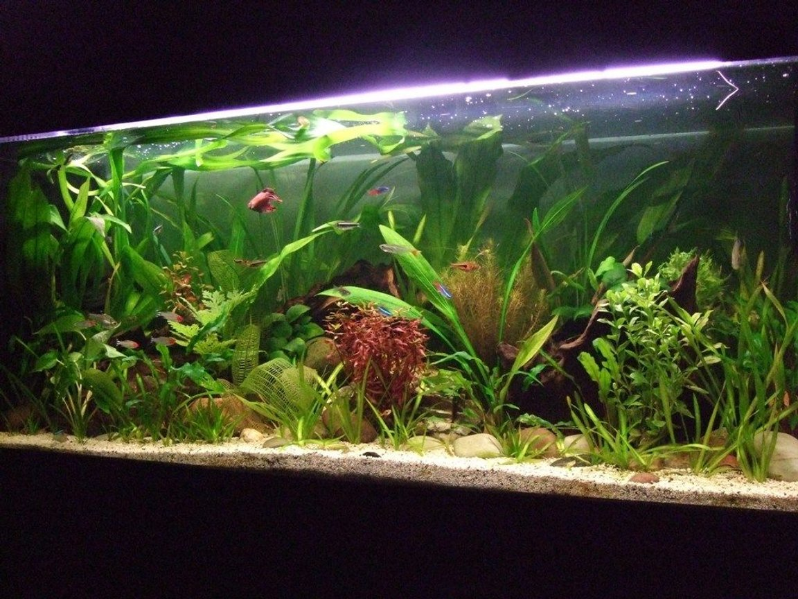 32 gallons planted tank (mostly live plants and fish) - another pic