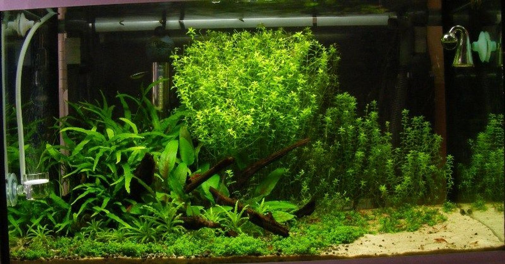 15 gallons planted tank (mostly live plants and fish) - 60 x 30 x 30cm - 60l/ 15g - 36w PC T5 (2.7wpg) - 3ml tropica plant nutrition+ daily - pressurized CO2 via 2kg cannister (35ppm) - fluval 205 external