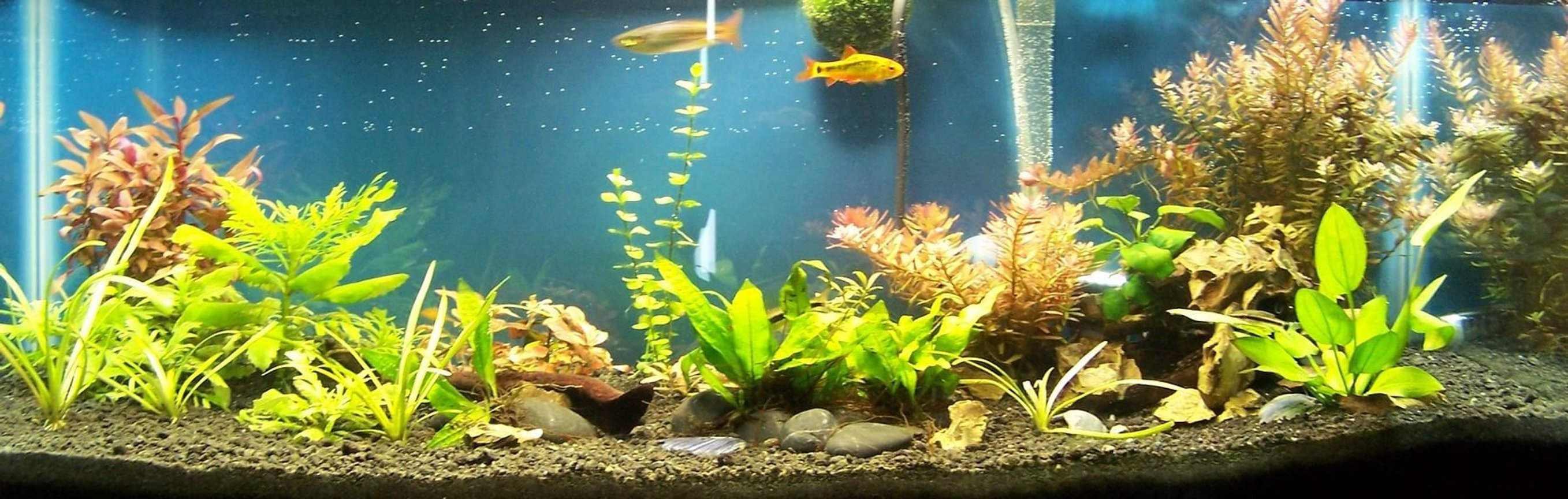 20 gallons planted tank (mostly live plants and fish) - 20 Gallon Long, 4*23 watt CFL Daylight bulbs
