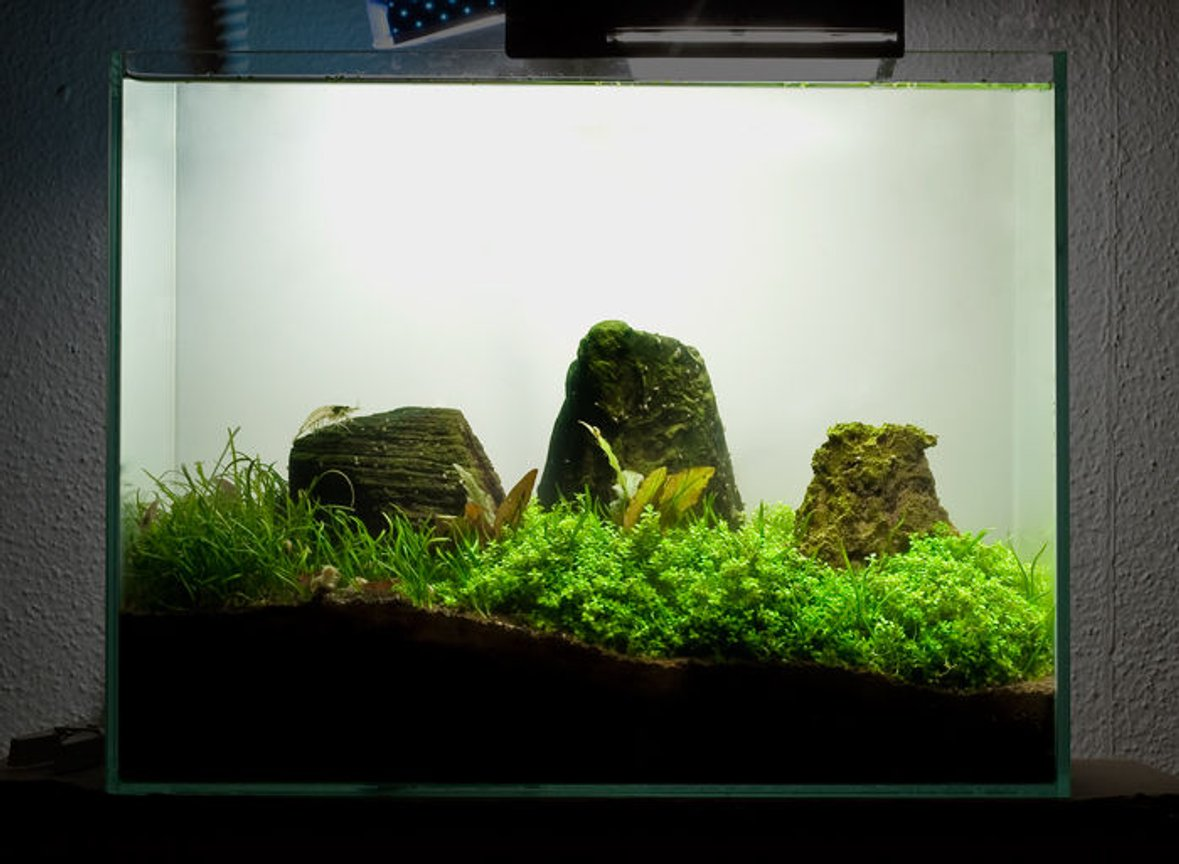 3 gallons planted tank (mostly live plants and fish) - 3.5 Gallon Mini Tank. Dwarf baby tears Dwarf crypts Micro ChainSword Cherry Shrimp Amano Shrimp