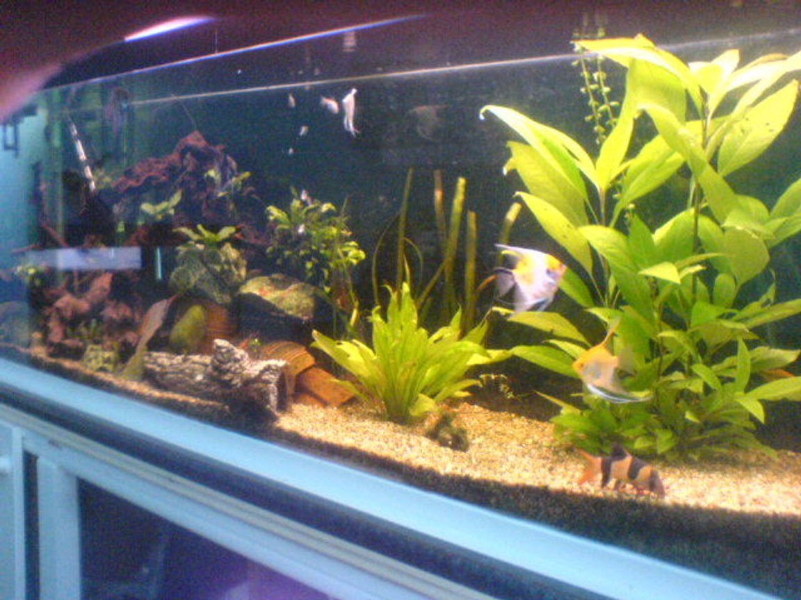 115 gallons planted tank (mostly live plants and fish) - tank