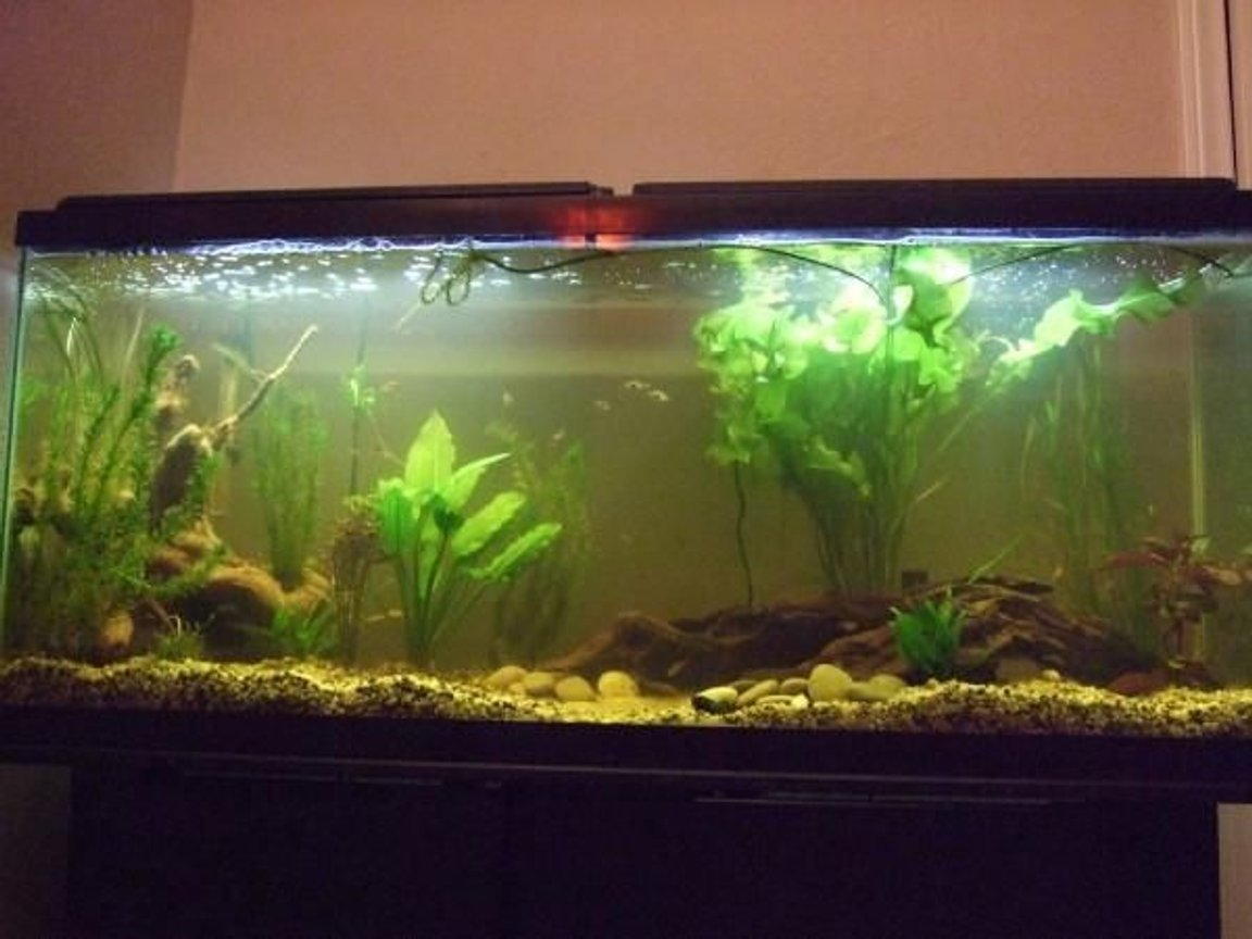55 gallons planted tank (mostly live plants and fish) - 55 Gallon planted aquarium